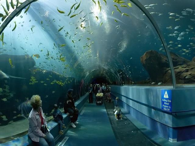 aquarium amboise 2